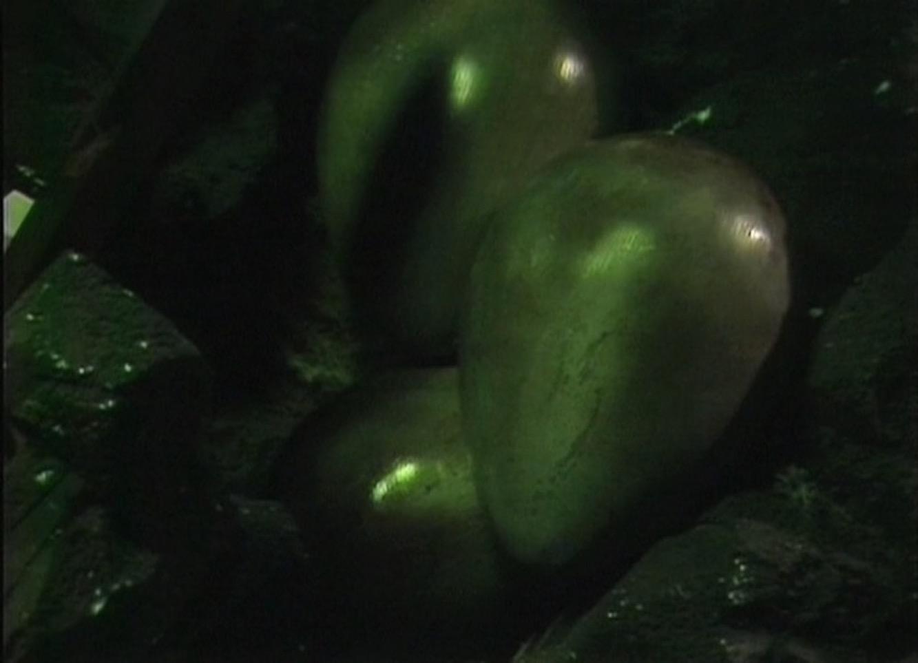 Giant Maggots
